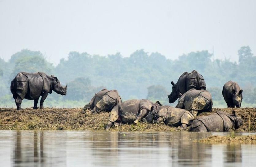 काजीरंगा नेशनल पार्क में बाढ़ से मरने वाले जीवों की संख्या 51 हुई