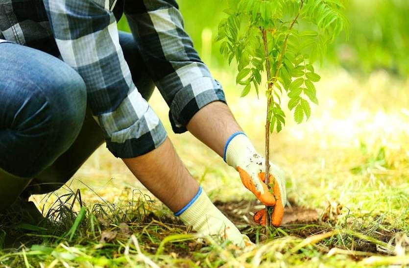 कॉलेज में प्रवेश लेते ही छात्र लगाएंगे पौधे, डिग्री मिलने तक खुद करेंगे देखरेख