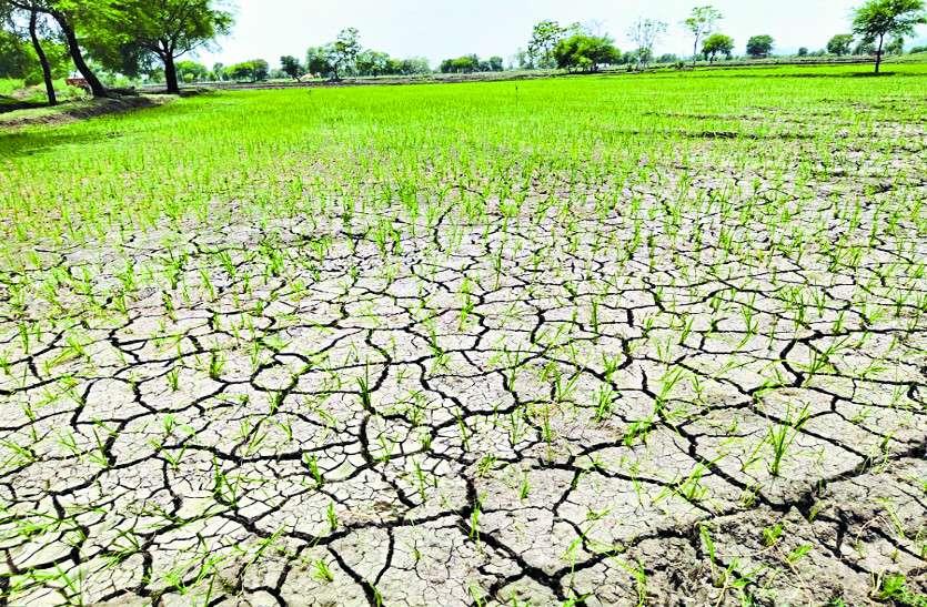मौसम विभाग ने दी भारी बारिश की चेतावनी, लेकिन यहां एक मिमी ही बरसा पानी, सूख गया खेत