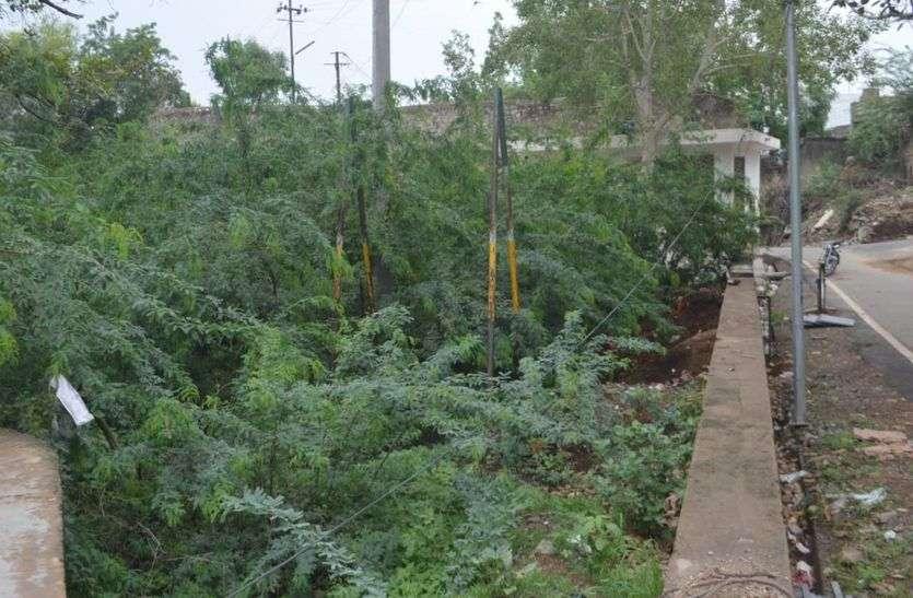 झाडिय़ों-कचरेे से भरा पड़ा है पार्क
