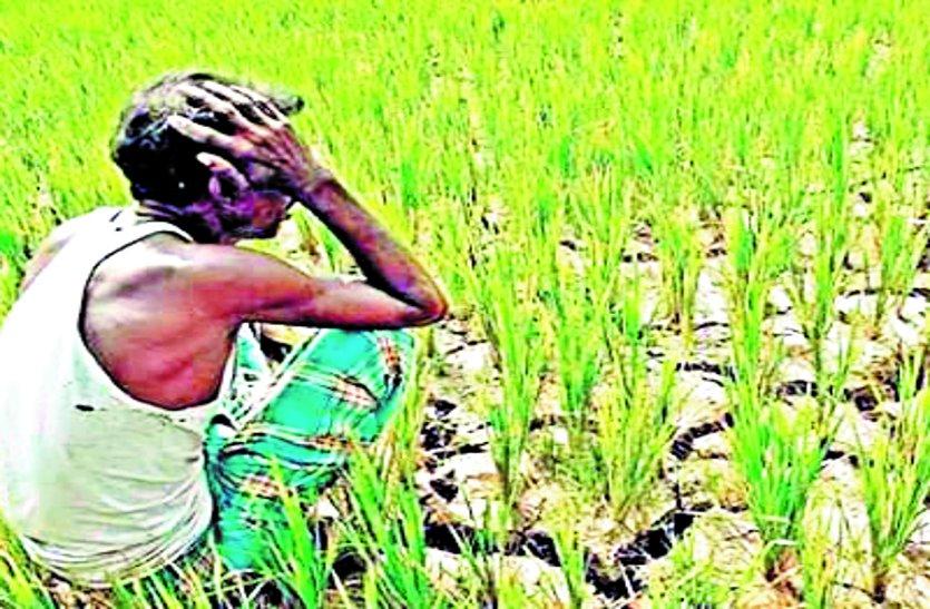 कम बारिश का असर: खेतों में दिखने लगी दरारें, मंडराया अकाल का साया