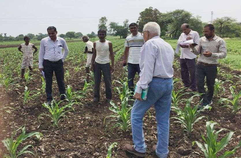 फसलों को थ्रीप्स-जेसिड, सेमिलुपर अटेक, किसान करे उपाय