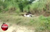 गौशाला के पास मृृत पड़े दर्जनों गोवंशों को नोचकर खा रहे थे कुत्ते, ग्रामीणों को मिली सूचना तो..., देखें वीडियो
