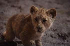 7 दिनों में ही The Lion King ने कमा डाले इतने करोड़, किसी ने सपने में भी नहीं सोचा होगा
