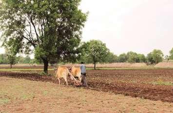 बारिश के बाद यहां खेतों में बढ़ी रौनक, मुरझाई फसलों को मिला जीवनदान