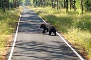 सड़क पर पहुंचा भालू, दहशत के चलते राहगीरों ने बदला रूट