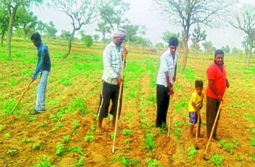 किसानों को होगा फायदा, खरीफ की बुवाई पूरी, पढ़े पूरी खबर