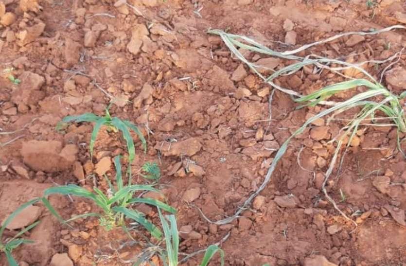 बिन वर्षा धरा पर नहीं निखर रही भूमिपुत्रों की मेहनत