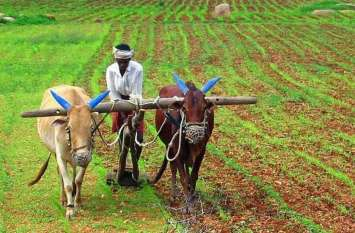 किसान ऋण माफ़ी : जमीन और फसल के बुवाई क्षेत्र के आधार पर स्वीकृत हो रहा है ऋण, 9 लाख से ज्यादा ने किसानों ने किया आवेदन