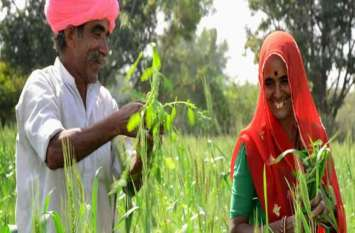 गहलोत सरकार का अन्नदाताओं को बड़ा तोहफा, लाखों किसानों का होगा करोड़ों रुपए का फसल बीमा