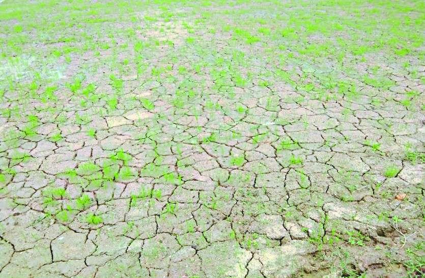 पानी की कमी से खेतों की नमी खत्म, अगर हफ्ते भर में बारिश नहीं हुई तो...