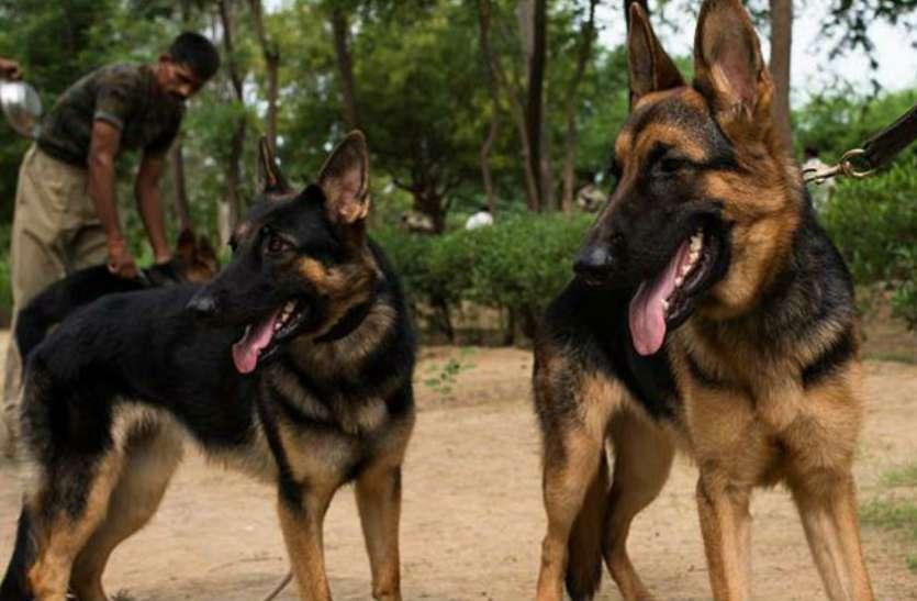 WWF के विजेता हैं ये डॉग, एक को मिला 35 तो दूसरे को 22 हजार रुपए का ईनाम