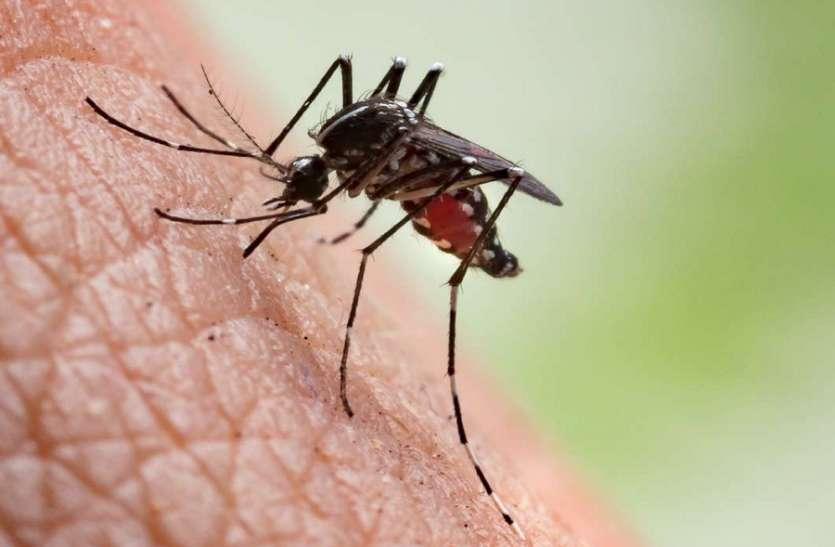 Malaria Free: जल्द मलेरिया मुक्त होगा अरूणाचल प्रदेश, 2 साल में एक भी मृत्यु नहीं
