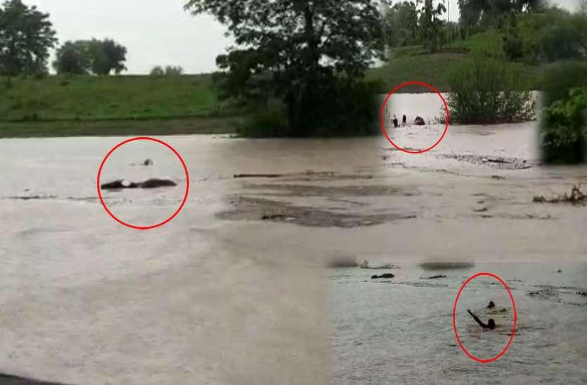VIDEO: भारी बारिश के कारण नदी में डूब रही थी गाय, जान जोखिम में डालकर दो युवकों ने ऐसे किया रेस्क्यू