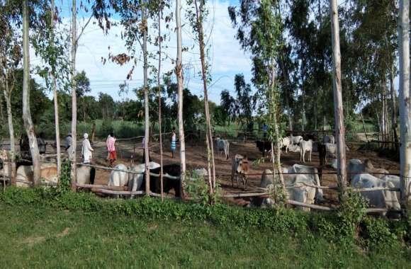ग्रामीणों ने चंदा लगाकर बनाई गौशाला, चारा-पानी की भी की व्यवस्था