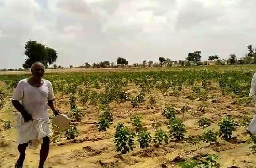 जिले के किसान कृषि में नवाचारों को दें बढ़ावा, कृषि विज्ञान केंद्र के वैज्ञानिक किसानों को खेती के लिए करें जागरूक