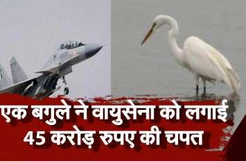 एक बगुले ने वायुसेना को लगाई 45 करोड़ रुपए की चपत