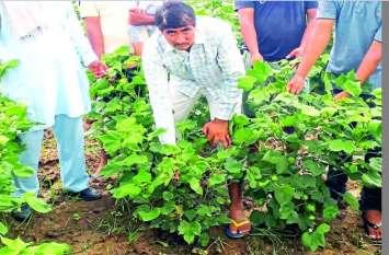 राजस्थान के किसानों को बंदर के पंजे की वजह से 20 करोड़ से अधिक का नुकसान, स्पेशल टीम ने की जांच