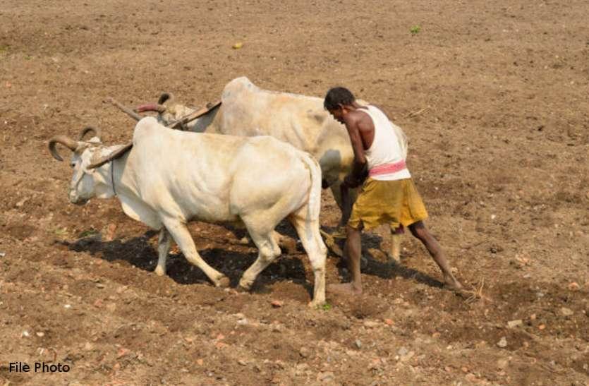 काम की खबर: वैज्ञानिकों ने किया रिसर्च, अब धान की खेती के लिए नहीं है पानी की जरूरत