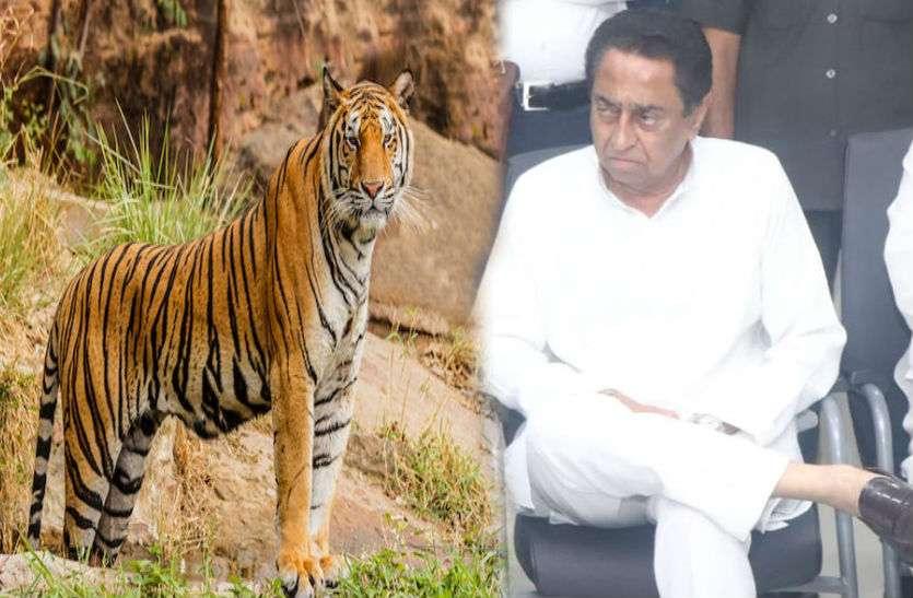 Tiger State: ...तो मध्यप्रदेश से 4 दिन में ही छिन जाएगा टाइगर स्टेट का दर्जा?