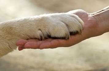 मालिक को बचाने के लिए आखिरी सांस तक लडता रहा जांबाज कुत्ता