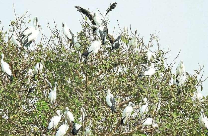 राजस्थान के इस घना में भी है दुर्लभ पक्षियों का खूबसूरत संसार...