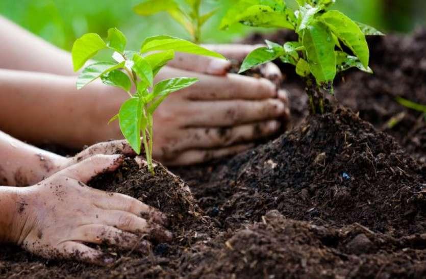 सीएम योगी आदित्यनाथ सुबह हरी झंडी दिखाकर शुरू करेंगे वृक्षारोपण