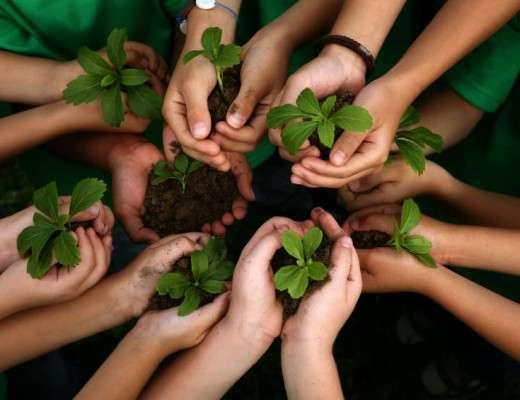 planting trees in school