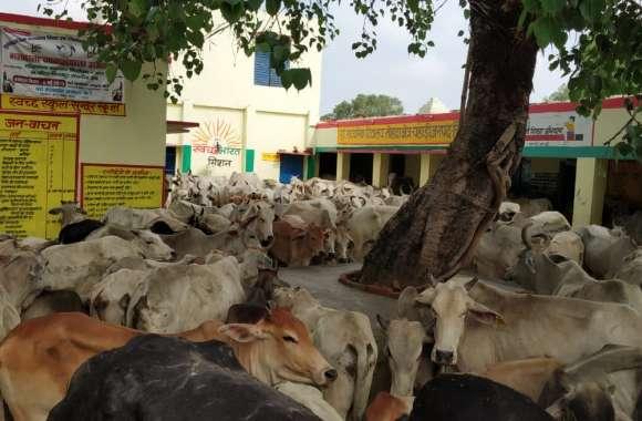 सरकारी स्कूल में जब अन्ना जानवर बंद कर रहे थे ग्रामीण, मौजूद थे छात्र-छात्राएं और टीचर