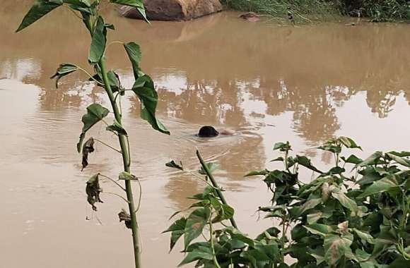 मछली पकडऩे युवक तैरकर पार कर रहा था नदी, अचानक आई बाढ़ में डूब गया, दूसरे दिन 1 किमी दूर मिली लाश