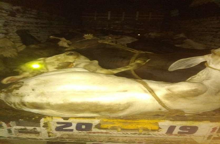Bharatpur: गोतस्कर व पुलिस में तड़ातड़ फायरिंग, फिर जो हुआ...