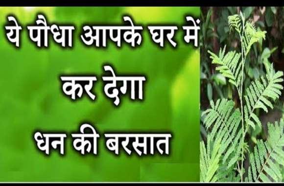 घर पर लगाए ये चमत्कारी पौधा जो आपको बना देगा मालामाल, इन देवतों को भी है बेहद प्रिय