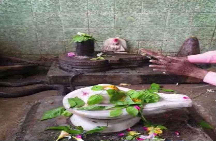 Sawan 2019 : सावन में शिव के सामने नतमस्तक दिखा नाग