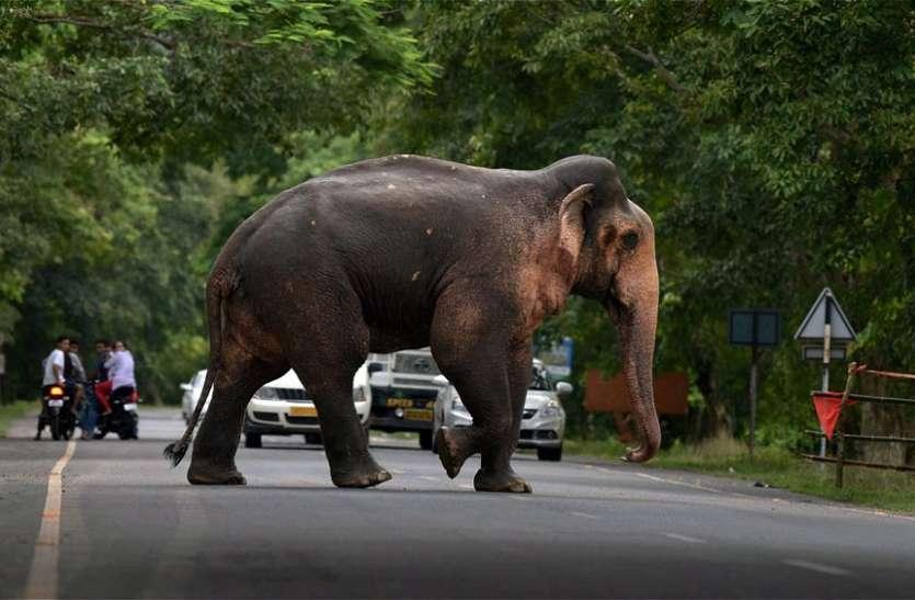 हाथी के हमले में वृद्ध की मौत