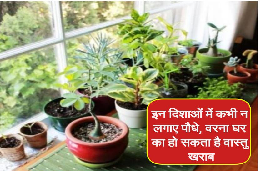 इन दिशाओं में कभी न लगाए पौधे, वरना घर का हो सकता है वास्तु खराब, पूरे परिवार को उठानी पड़ेगी परेशानी