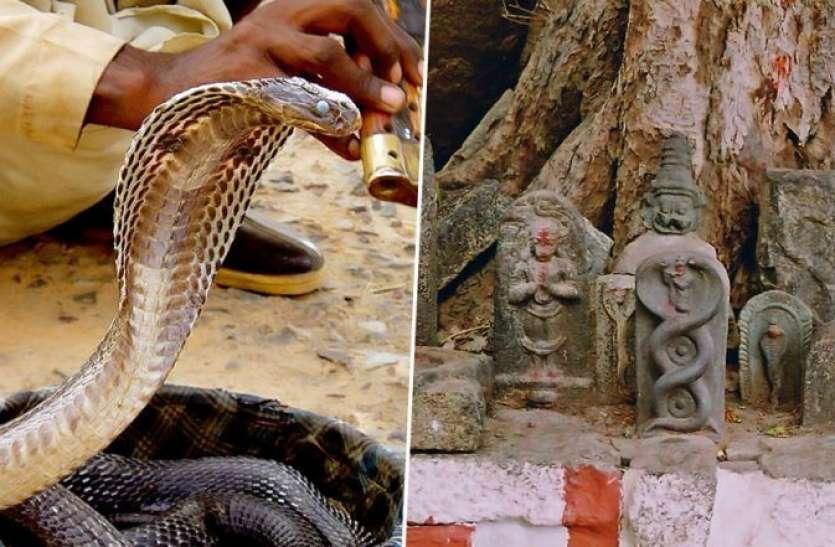 Nag panchami: कालसर्प दोष निवारण के लिए अपनी राशि अनुसार करें नाग देवता की आराधना