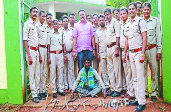 महासमुंद: चीतल के सात सींग, जंगली जानवर और बेशकीमती लकड़ियां के साथ पुलिस ने पकड़ा ग्रामीण को