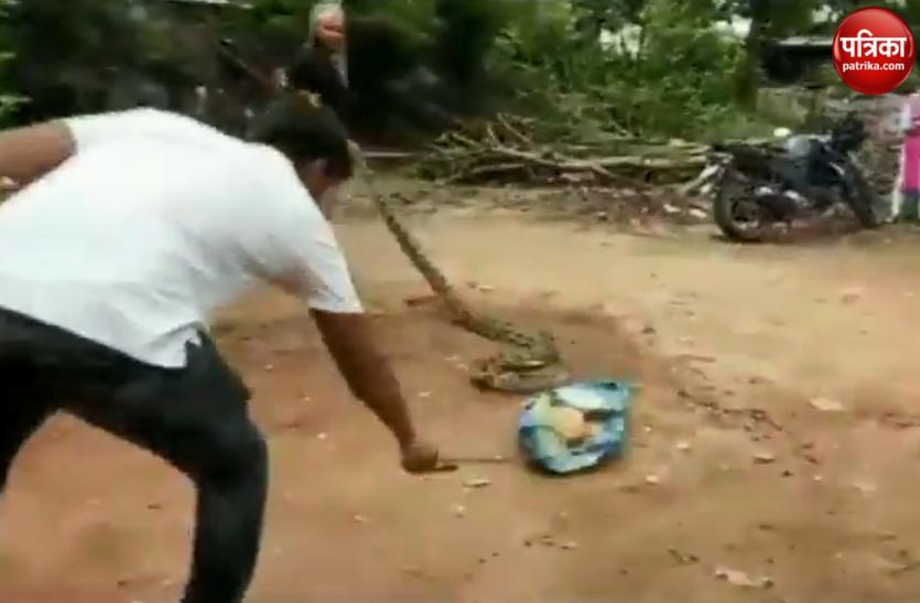 Watch Video: घर के बाहर निकला इतना बड़ा अजगर,पकड़ना चाहा तो कर दी हालत खराब