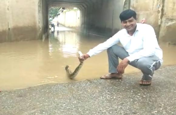 Video: अंडरपास में बारिश से भरे पानी में अचानक हुई हलचल तो भागने लगे लोग, देखकर हैरान रह गये वन विभाग के अधिकारी