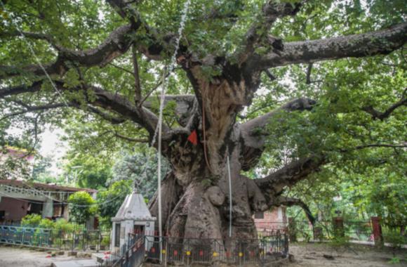 #OnceUponATime: ऐसा वृक्ष जिसकी पूजा से पांडवों को मिली थी महाभारत में जीत, इंद्रलोक से लाये थे धनुर्धारी अर्जुन