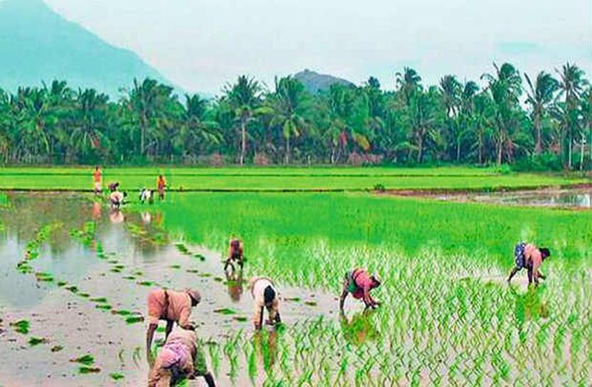 सुबह से शाम तक हुई झमाझम बारिश से बढ़ा जलस्तर, किसानों के चेहरे खिले