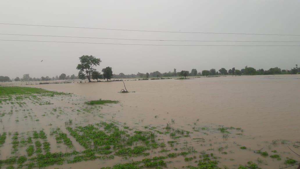 ट्रैक्टरों की जुताई से मिट्टी कठोर बन रही, रिसाव क्षमता कम होने से थोड़ी बारिश में ही लबालब हो रहे खेत