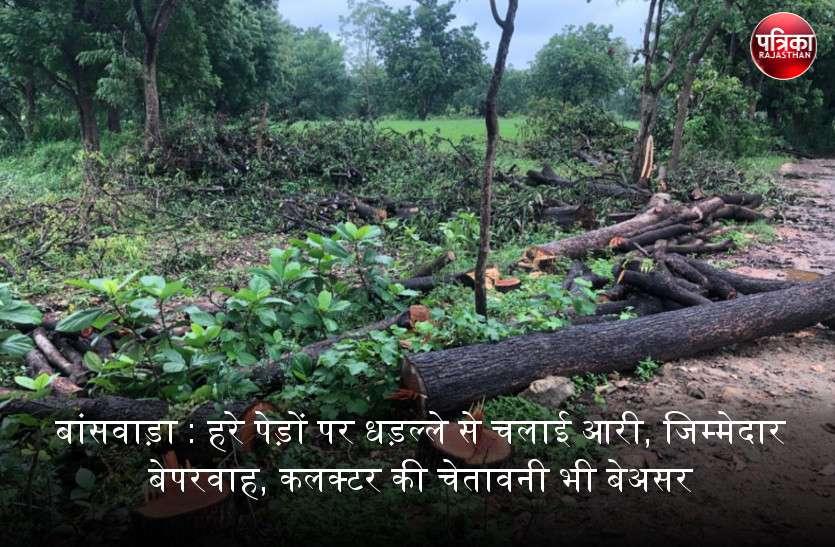 बांसवाड़ा में पेड़ लगाने वालों की मेहनत पर पानी फेर रहे पेड़ काटने वाले लोग, रोकथाम के जिम्मेदार भी बेपरवाह...