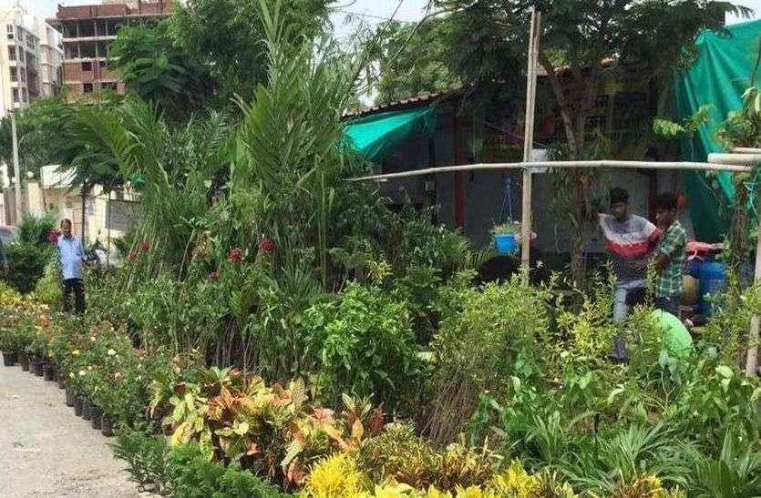 सड़क किनारे हरियाली का बाजार