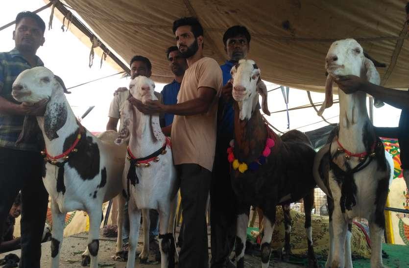 Bakreed 2019: मंडियों में उमड़ रहे खरीदार, 10 हजार से लेकर 10 लाख रूपए तक के बकरे मौजूद