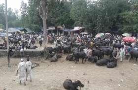 Eid ul Adha बकरीद के लिए पशु खरीदने आए इन लोगों की वीडियो देख आ जायेगी आपको भी हंसी