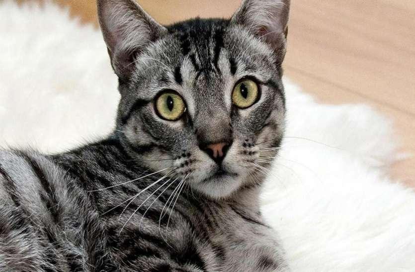 बिल्ली के रास्ता काटने से आते हैं ये शुभ समाचार, खबर पढ़कर टूट जाएगा आपका अंधविश्वास