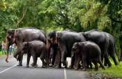 Odisha: घटे बाघ तो बढ़ गए हाथी, होता रहा संघर्ष नहीं बन पाए साथी