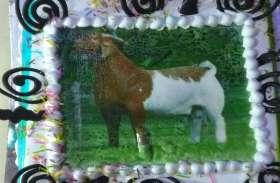 अल्ला को प्यारी है कुर्बानी... बकरीद पर मुस्लिम परिवार ने दी अनोखी कुर्बानी