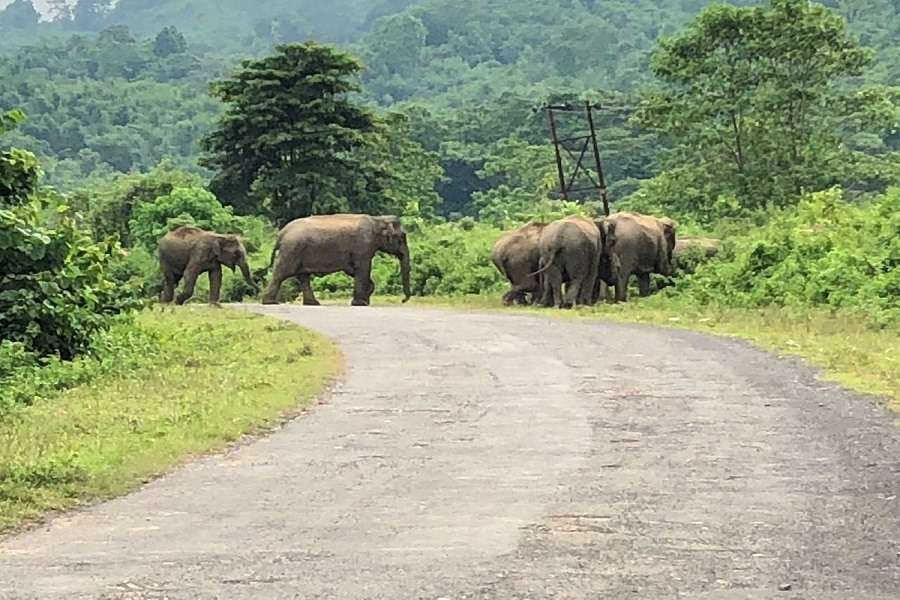 shocking: People Eating Elephant flash in north east states